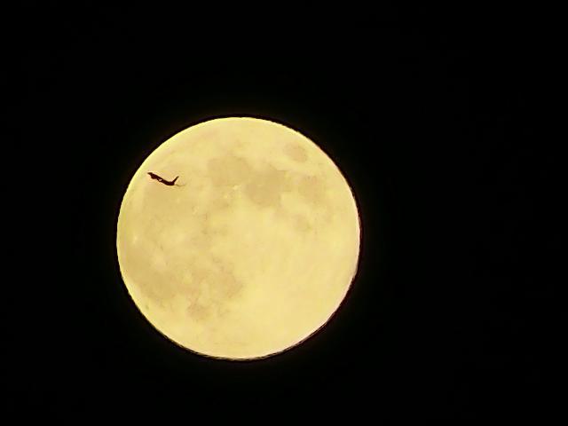 月に旅客機