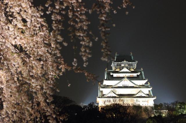 西の丸庭園夜桜鑑賞2