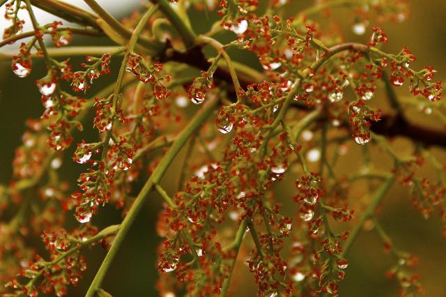 五月雨の花