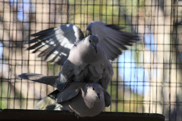 自然の営み埼玉県の県鳥シラコバト