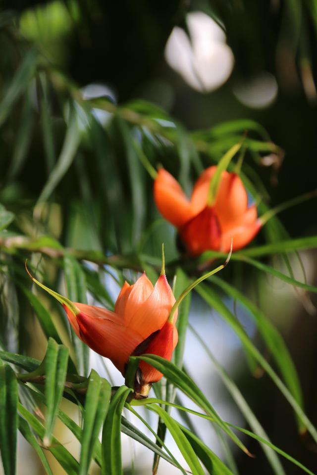 華麗な少し変わった植物の見頃