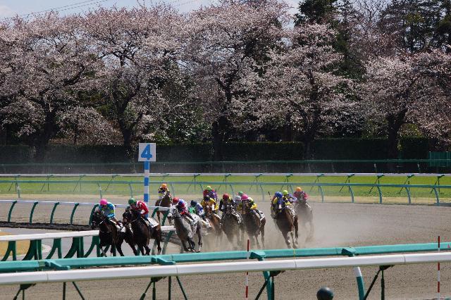 中山の春競馬