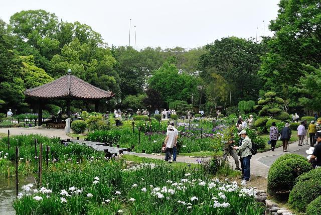 大阪 城北公園 花菖蒲園開催