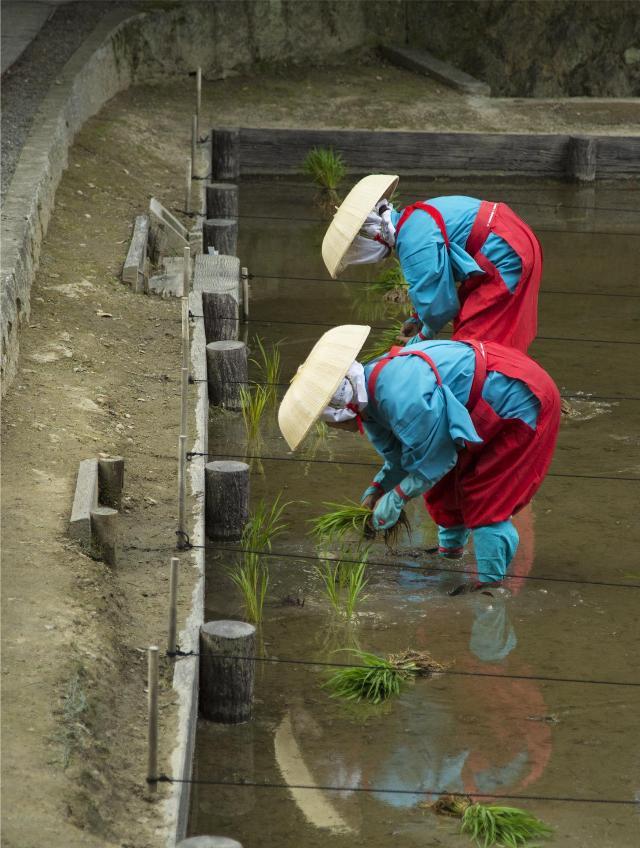 2014年 京都伏見稲荷大社/田植祭