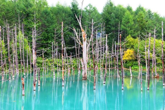 A blue pond in Furano, Hokkaido.