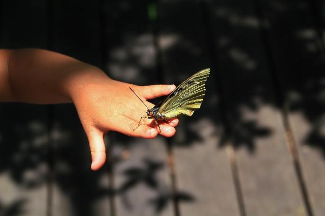 指先のオオムラサキ(♀)