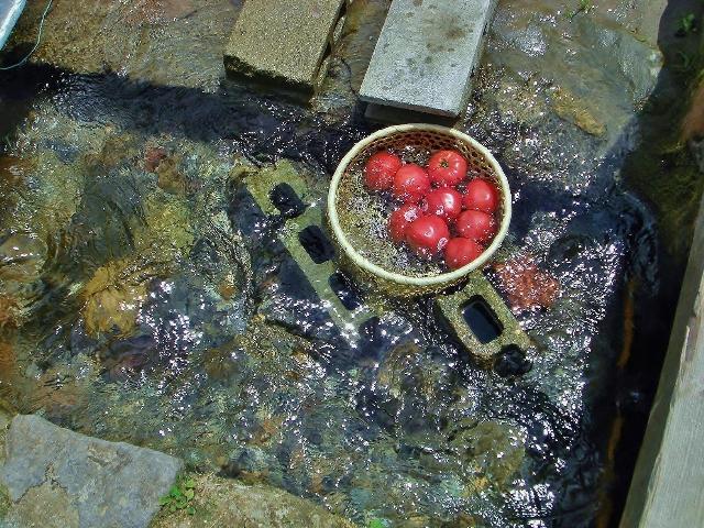 冷えたトマト、一個70円