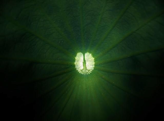 蓮の葉の中の大宇宙