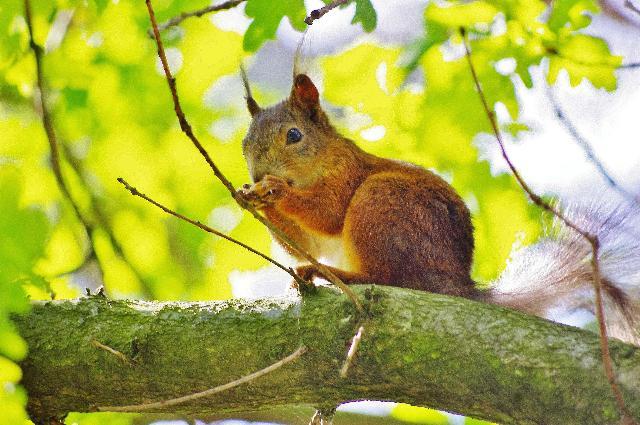 木陰の昼食