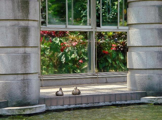 植物園の中庭にて