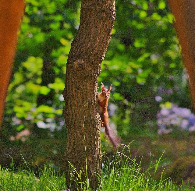忍法木隠れ、秘かに偵察。