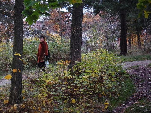 秋の森へ、、、童話を見つけに、、