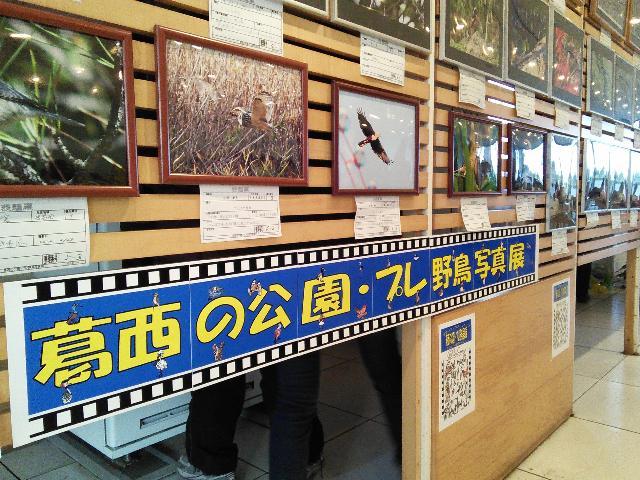 葛西の公園・プレ野鳥写真展@葛西臨海公園