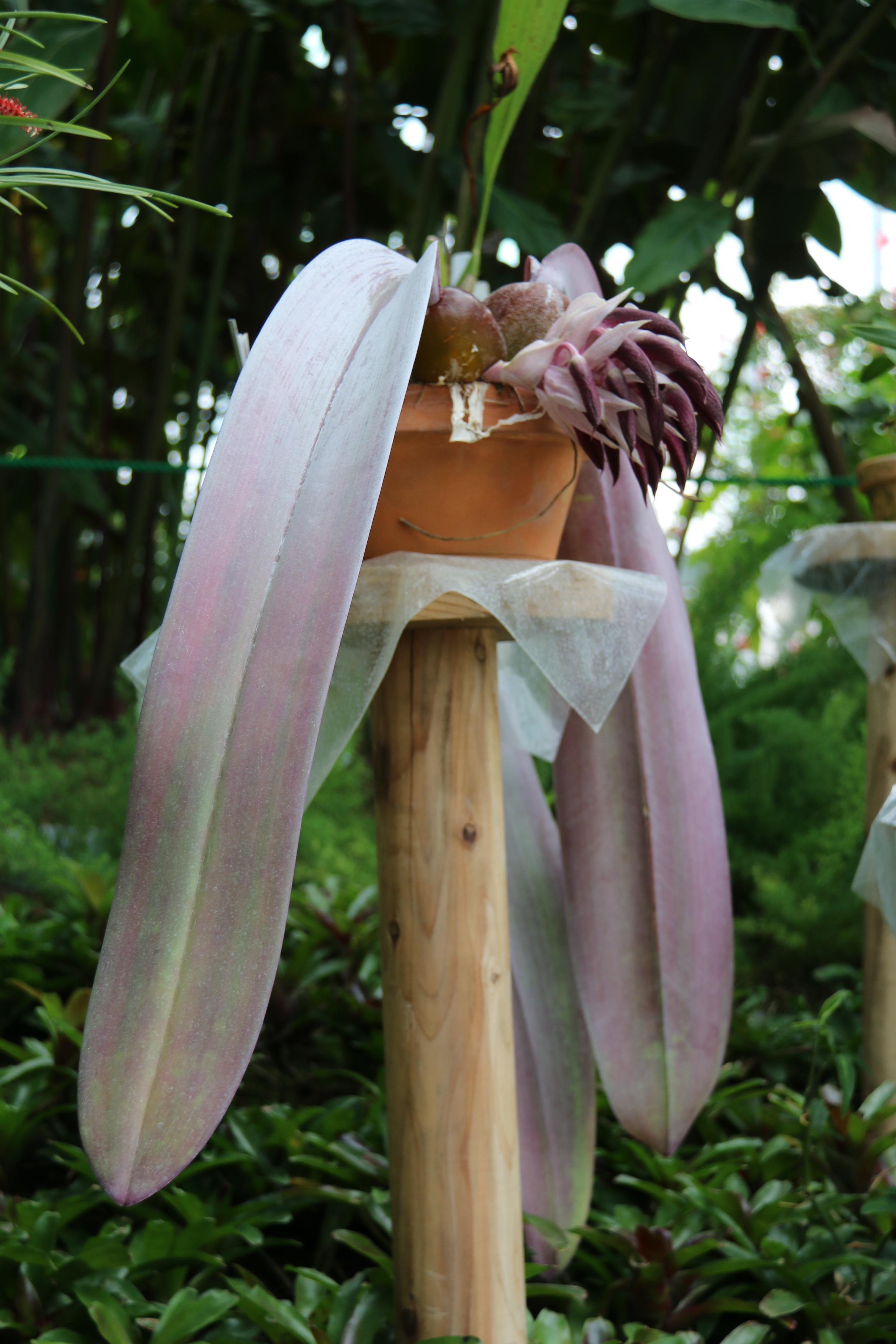 珍しい珍奇妙な形の花~開花。展示中