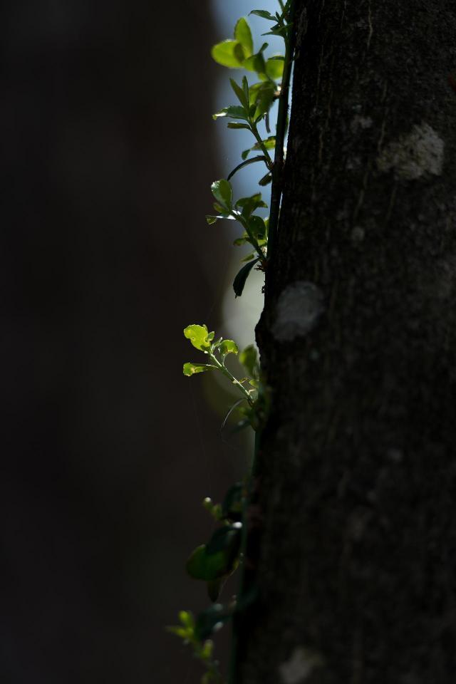 小さな光で輝く