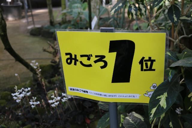 みごろ1位~どんな植物~??