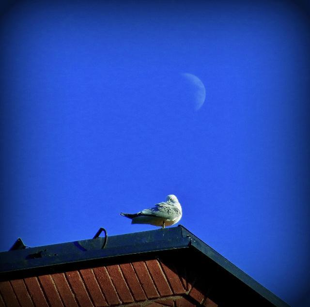 月下の麗人。