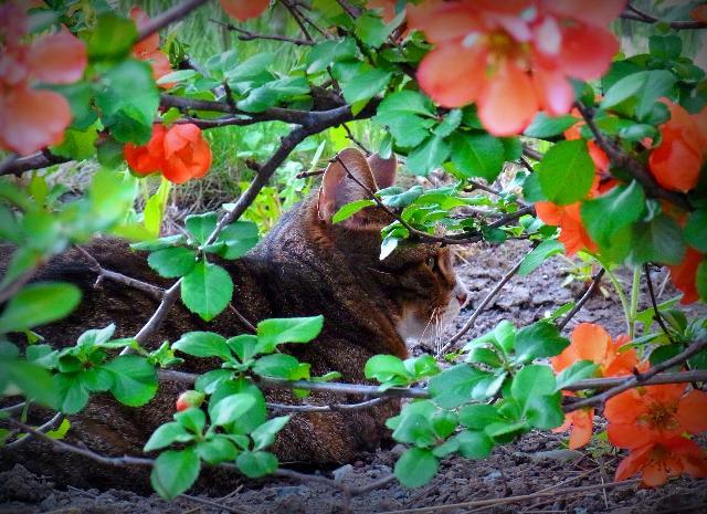 花陰に潜む麗人