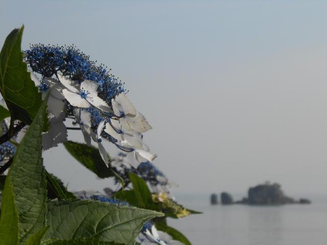 紫陽花と風流島(たわれじま)