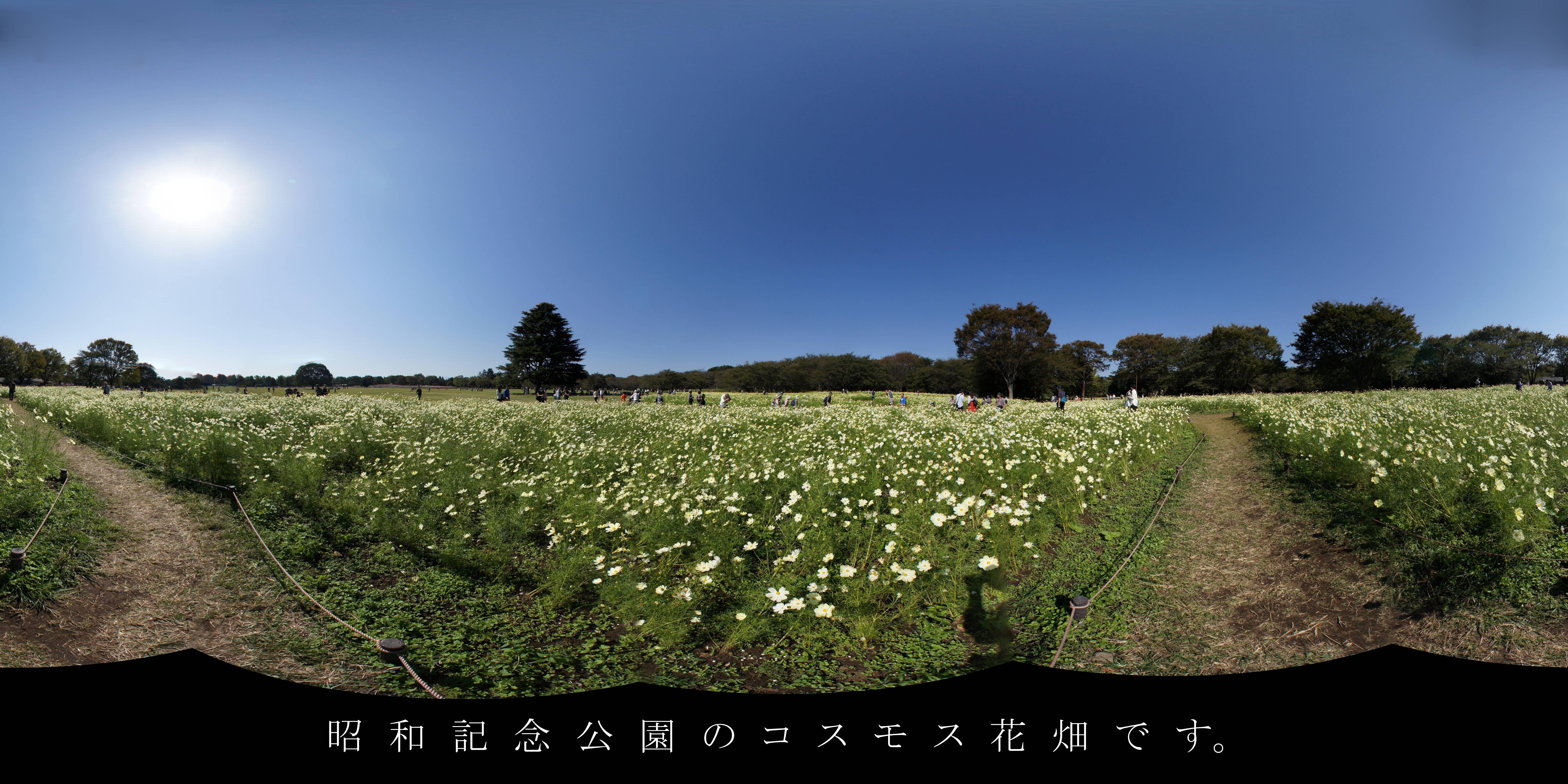 昭和記念公園「原っぱ東花畑」