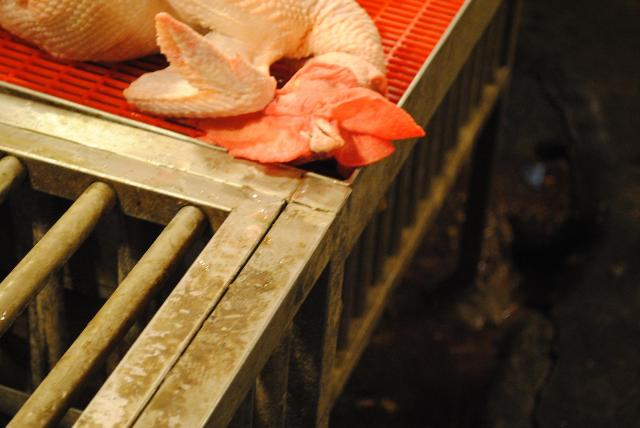 鳥インフルエンザの早期終息を願う