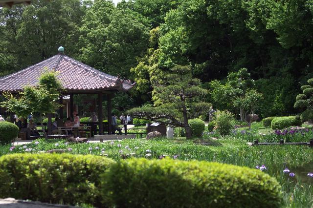大阪 城北公園の花しょうぶ開園中