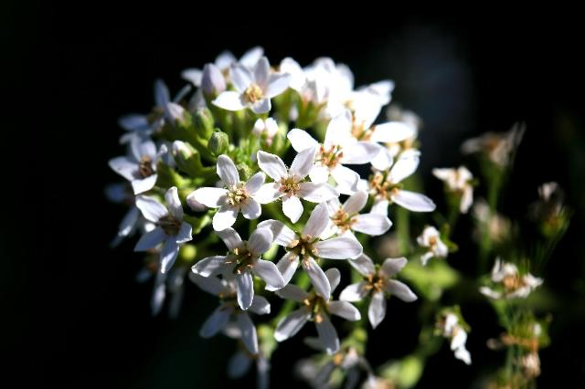 久々の花びら