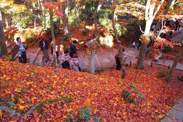 秋の彩りを求めて