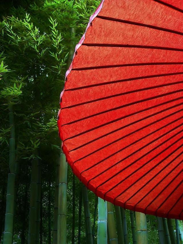 長谷寺の竹林と赤い和傘
