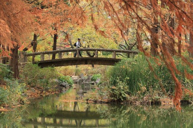 秋の橋を渡る