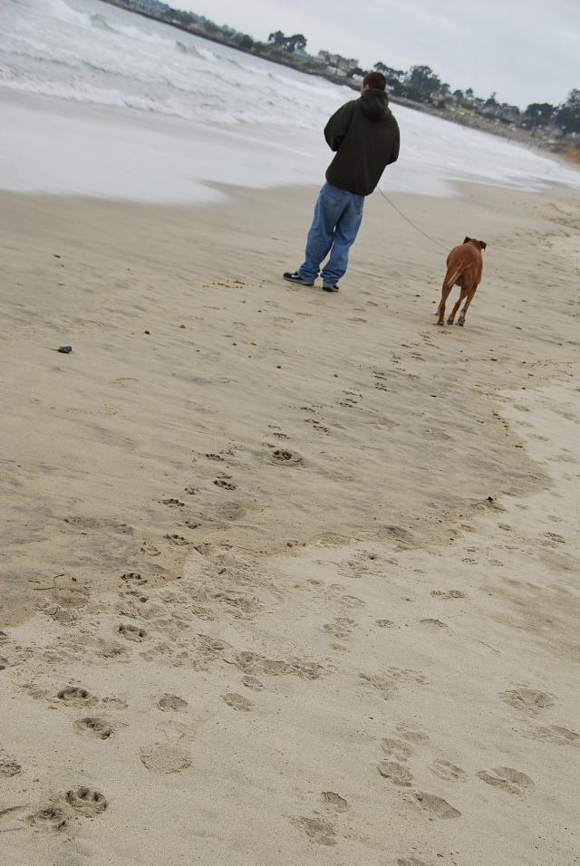 ビーチでお散歩
