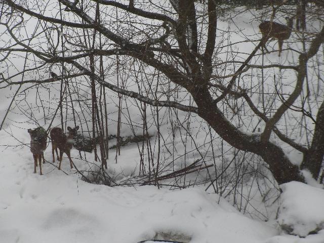 雪降る森で小鳥と小鹿の立ち話し。