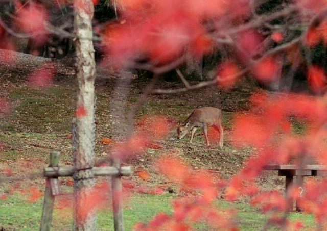 残秋の奈良