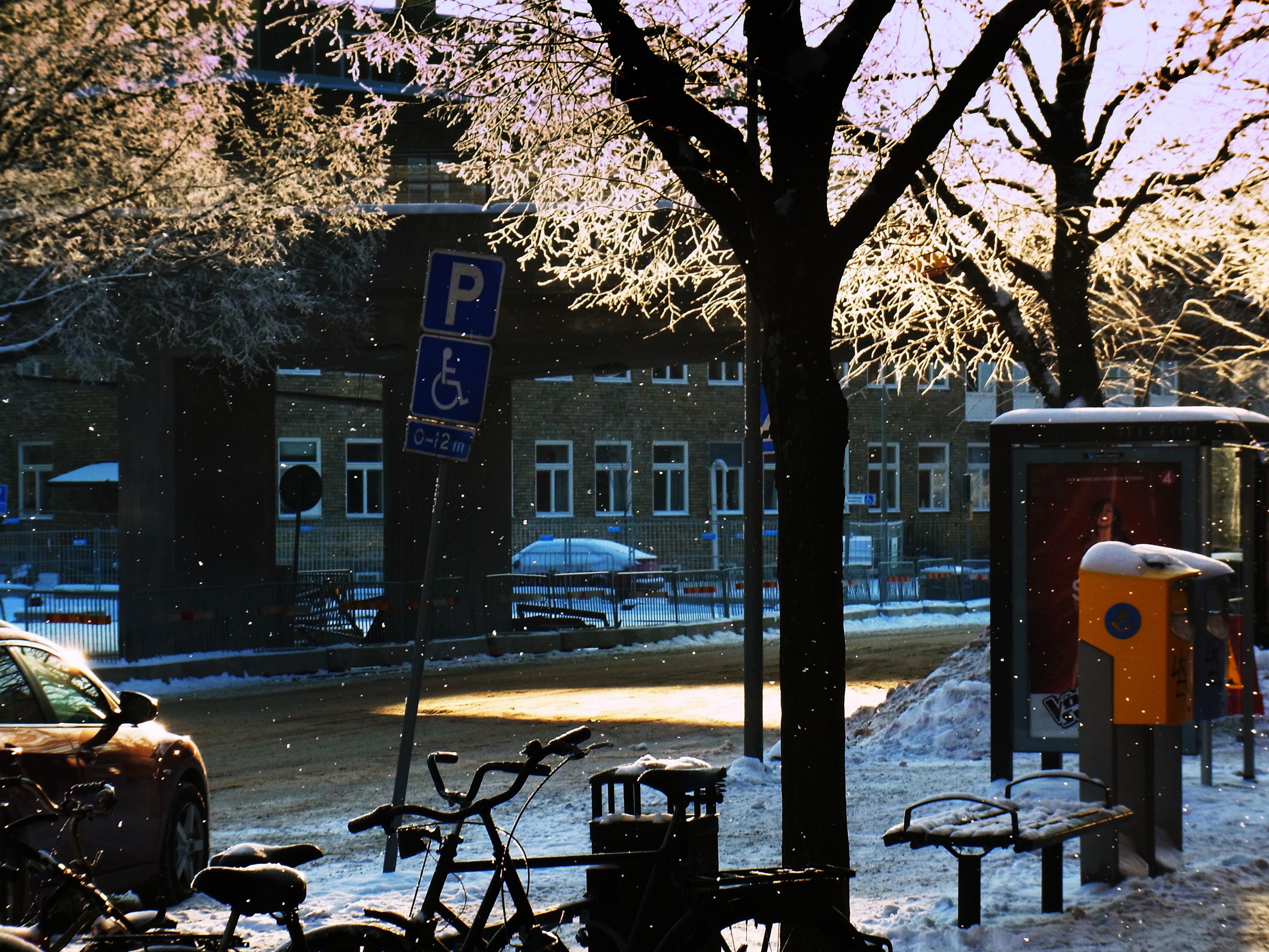 氷の花が日を受けて。小雪がそそぐ、おらが、あさ~~