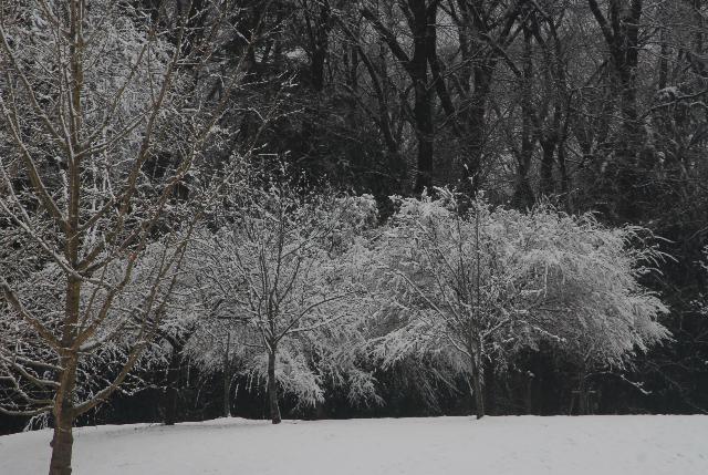 埼玉県でも積雪
