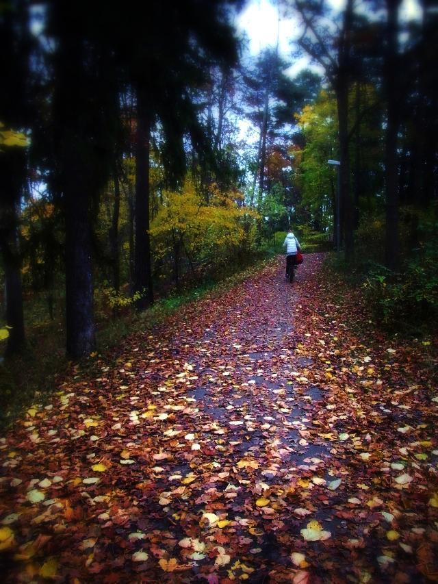 落ち葉の小道。